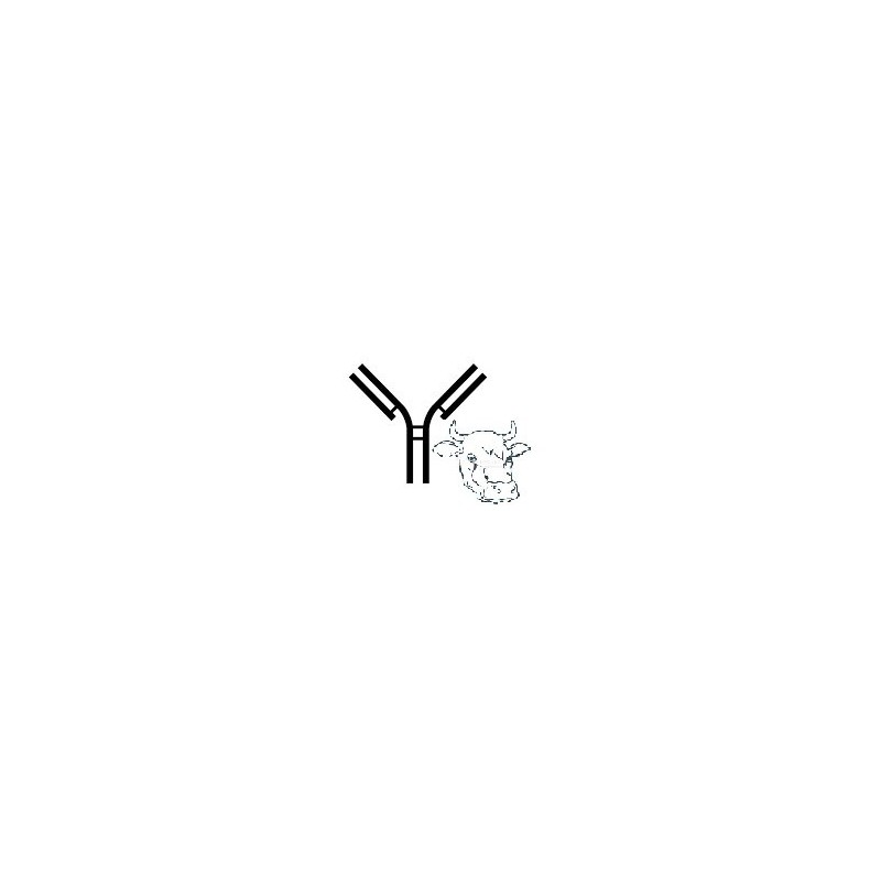 Anticorpo monoclonale per bovino MM12A IgG1