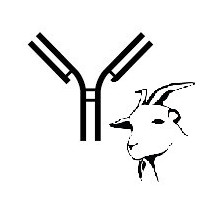 Anti-goat monoclonal antibody 86D (clone TCR1-N6 ? chan?)