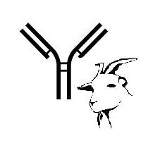 Anti-goat monoclonal antibody GB54A (clone WC1- N25 epitope)